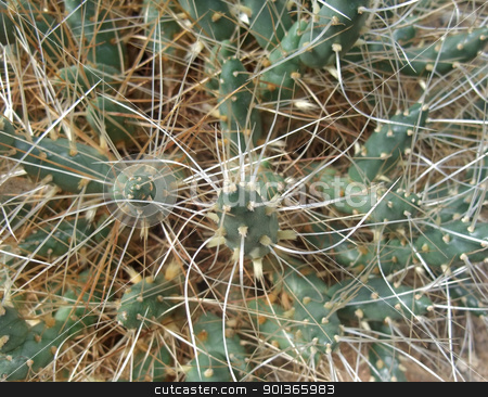tubular cacti detail stock photo, high angle full frame detail of a cactus by prill