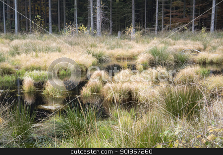 swampland stock photo, detail of a swamp in Southern Germany at autumn time by prill