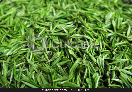 Fresh green tea stock photo, Fresh green tea leaves by John Young