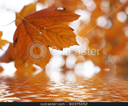 Autumn leafs above the water stock photo, Autumn leafs above the water - fall background by orson
