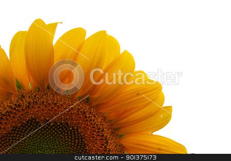 Nice sunflower stock photo, Nice sunflower - detail by orson
