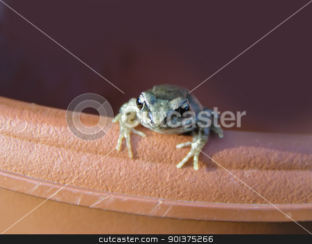 Small frog on the flowerpot stock photo, Small frog on the flowerpot - front view by orson