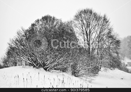 snow in mountains stock photo, Trees covered with hoarfrost and snow in mountains by freeteo