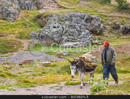 Donkey in Peru stock photo, SACRED VALLEY,  PERU - MAY 26 : Donkey carrying wood in the Andes mountains of Peru by Kobby Dagan