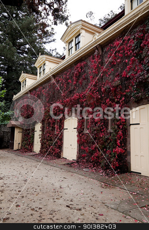 Barn Doors stock photo, A stable with several wood doors and covered with red ivy by Kevin Tietz
