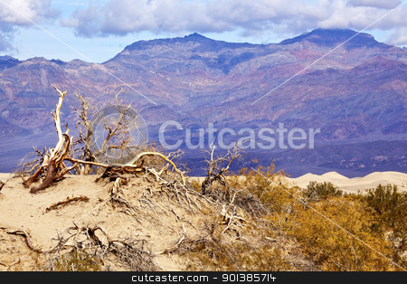 Dry Dead Trees Mesquite Flat Dunes Grapevine Mountains Death Val stock photo, Dry Dead Trees Mesquite Flat Dunes Grapevine Mountains Death Valley National Park California 190 Highway by William Perry