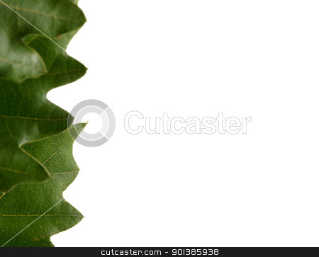 green leaves stock photo, green leaves on white background by Nenov Brothers Images