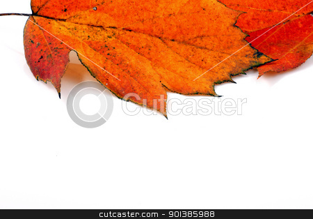 Various autumn leaves stock photo, Various autumn leaves by Nenov Brothers Images