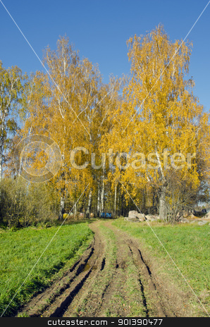 Rural road autumn birches and  hives near them. stock photo, Rural road, autumn birches and several colored hives among them. by sauletas