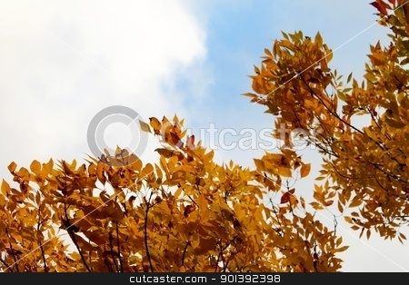 Autumn Sky stock photo, Beautiful autumn leafs with sky in the background by Henrik Lehnerer