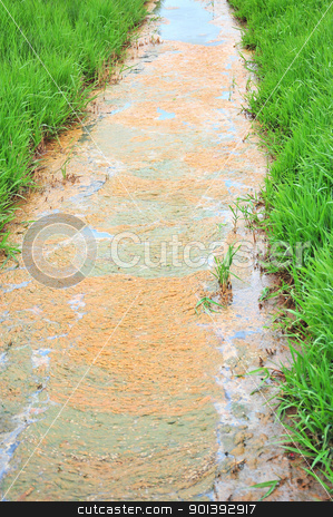 Polluted stream. stock photo, Polluted stream in the middle of a field. by OSCAR Williams