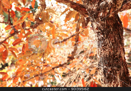 fall leaves tree stock photo, fall leaves tree close up at day by Keng po Leung