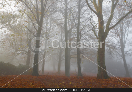 Trees in dense fog on cold November day stock photo, Mist in fall - Trees in dense fog on cold November day by Colette Planken-Kooij