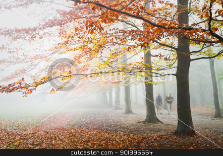 Beechtrees with brown and yellow leaves in dense fog stock photo, Beechtrees with brown and yellow leaves in dense fog in autumn  by Colette Planken-Kooij