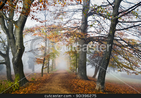 Path with beechtrees in the mist in autumn stock photo, Mist in fall - Path with beechtrees in fog on cold November day by Colette Planken-Kooij