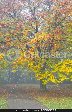 Colorful beechtree and mist in fall stock photo, Fog in November - Colorful beechtree in mist in fall by Colette Planken-Kooij