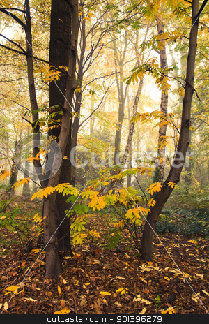 Forest in fall with mist stock photo, Misty forest in fall with some sunshine through the fog by Colette Planken-Kooij
