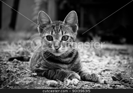 Little kitten in the yard stock photo, Little kitten lying in the yard. Black and white  by Vladimir Gladcov