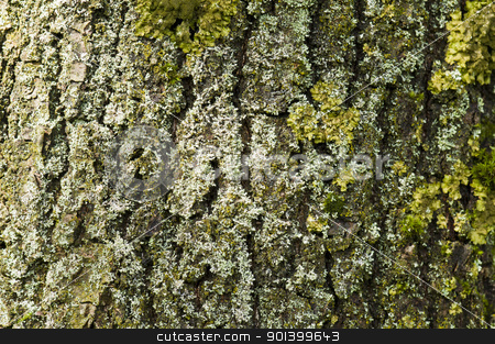 Partial view of a tree trunk bark stock photo, Partial view of a tree trunk bark with moos by Ulrich Schade