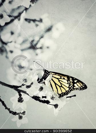 butterfly stock photo, butterfly by klenova