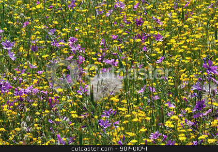 field of wild flowers in the spring stock photo, Field of blooming wild flowers. Springtime background. by sirylok