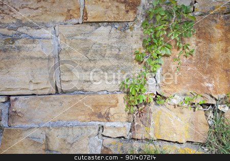 sandstone wall and vine stock photo, vintage sandstone wall with green vine and lichen by Marek Uliasz