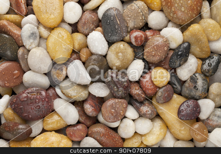 wet river pebbles  stock photo, colorful river pebbles with water drops by Marek Uliasz