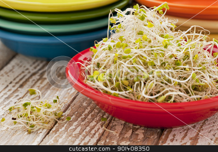 broccoli and clover sprouts stock photo, broccoli and clover sprouts in red bowl on grunge wood table by Marek Uliasz