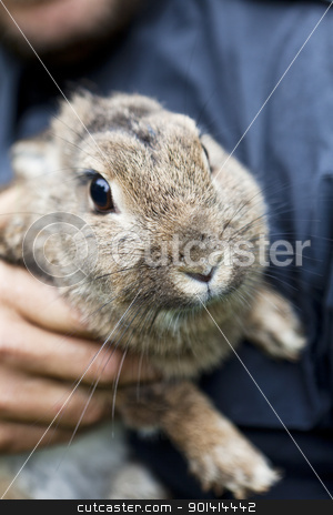 Rabbit Front view stock photo, Front view of a grey brown rabbit by Anne-Louise Quarfoth