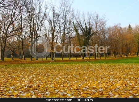 In the park stock photo, Autumn park with empty trees. by Primus