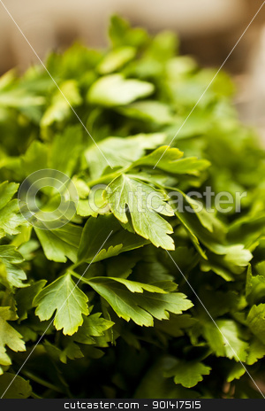 Parsley stock photo, Parsley with short focal depth by Anne-Louise Quarfoth