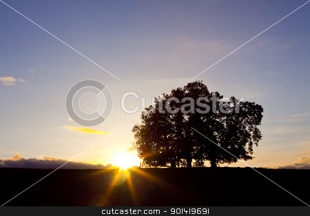 Three oak trees at sunset stock photo, Three oak trees on hillside with setting sun by Bryan Mullennix