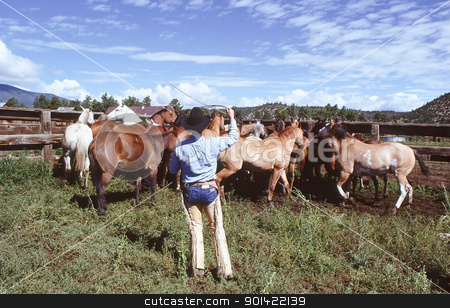 Western horse  roundup. stock photo, Western horse roundup on a ranch. by OSCAR Williams