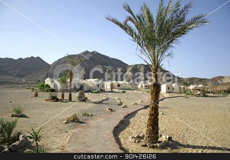 palm trees on beach resort stock photo, palm trees on beach resort, red sea sinai, egypt by Paul Prescott