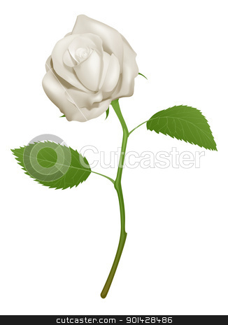 Illustration of a beautiful white rose stock vector clipart, An illustration of a beautiful white rose by Christos Georghiou