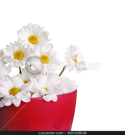 Daisy flowers stock photo, Daisy flowers isolated on white background  by sutike