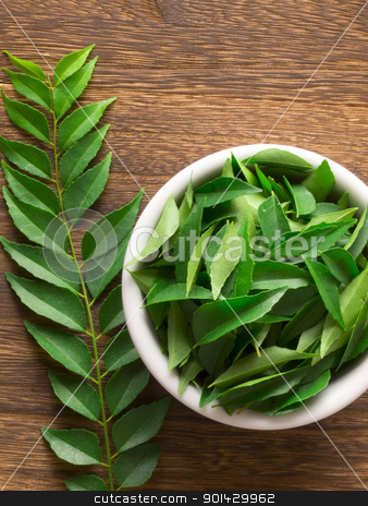 curry leaves stock photo, close up of fresh indian curry leaves by zkruger