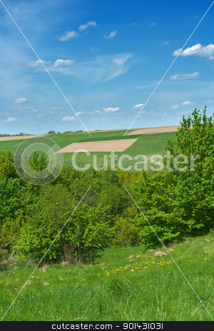 Bushes and fields stock photo, Bushes and fields by vtorous