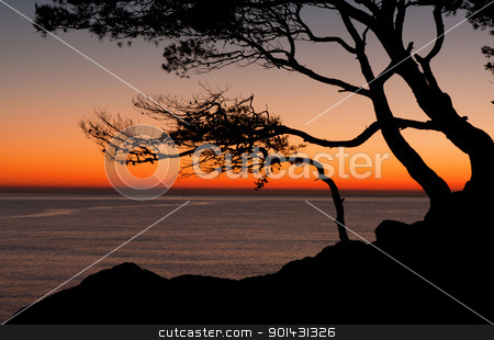 Sunrise stock photo, Beautiful beach at sunrise wih trees by ARPAD RADOCZY
