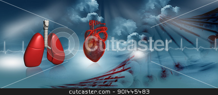 Human heart and lungs 	 stock photo, Human heart and lungs 	 by dileep