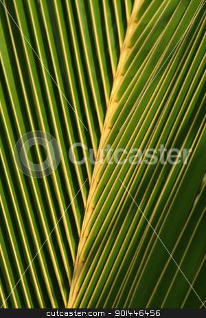 Palm Leaf Closeup stock photo, A closeup of a palm tree leaf. by Chris Hill