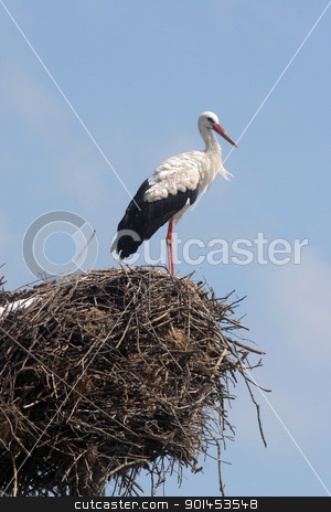 Stork in its nest stock photo, Stork in its nest over a clear blue backround by Zvonimir Atletic
