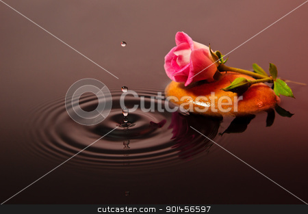 Pink Rose Water 1 stock photo, Pink Rose Water 1 by Riaan Roux