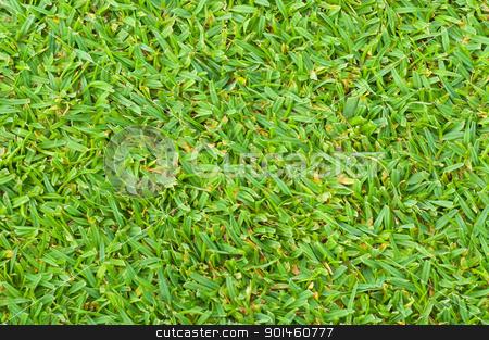 green grass stock photo, green grass background by Komkrit Muangchan