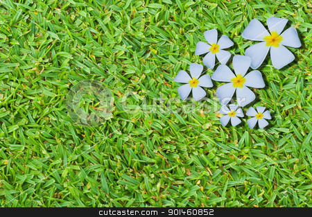 Thai flower on green grass background stock photo, Thai flower on green grass background by Komkrit Muangchan