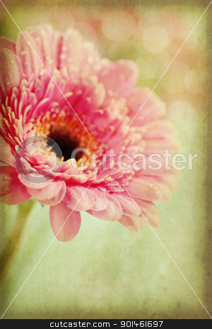 gerbera flowers stock photo, Close up abstract of colorful pink daisy gerbera flowers by klenova