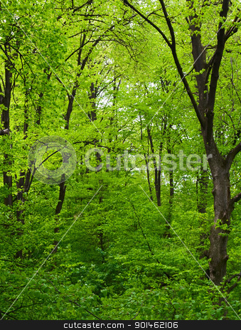 Green tree in forest stock photo, Green trees in the forest by vtorous
