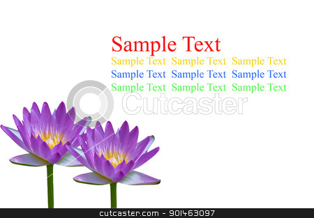 Thai purple lotus isolated on white background stock photo, Thai purple lotus isolated on white background by Komkrit Muangchan