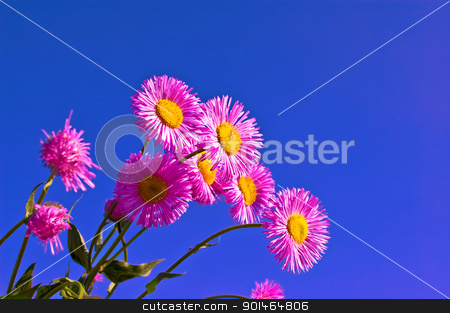 Pink flowers in the sky stock photo, Pink flowers against the blue sky by rezkrr