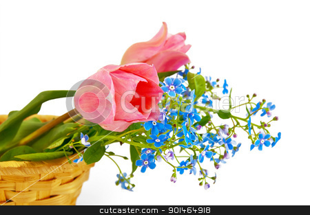 Flower in baskets stock photo, Bouquet of two pink tulips and blue field flowers in a wicker basket isolated on a white background by rezkrr